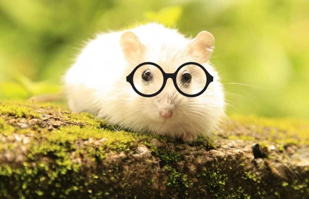 hamster mignon avec lunettes mauvaise vue
