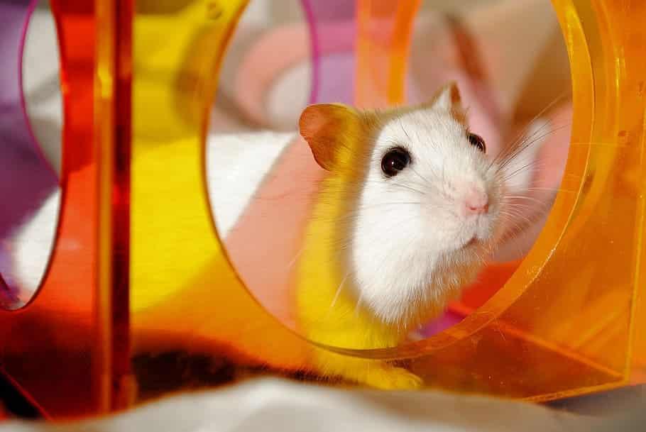 tube pour hamster